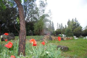 wooden Edge Of The Village, Lodges  Ma'ale Gamla - big - 25
