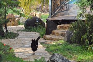 wooden Edge Of The Village, Lodges  Ma'ale Gamla - big - 61