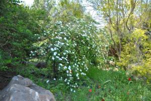 wooden Edge Of The Village, Lodges  Ma'ale Gamla - big - 53