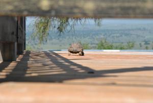 wooden Edge Of The Village, Lodges  Ma'ale Gamla - big - 60