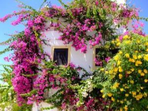 obrázek - Casa Portuguesa