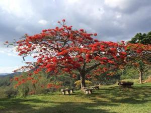 Fazenda Caturama, Дома для отпуска  Areal - big - 74
