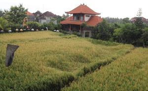 Villa Bhuana Alit, Гостевые дома  Убуд - big - 90