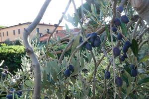 Podere San Giuseppe, Aparthotels  San Vincenzo - big - 34