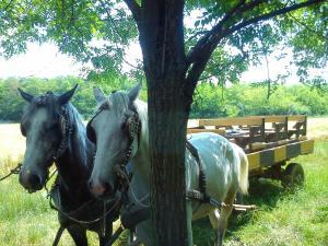 Farm stay Orlov put, Bauernhöfe  Bilje - big - 76
