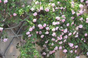 Ca Na Catalina, Villen  Pollença - big - 4