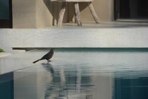 Casas de Agua, Apartmánové hotely  Pláž Santa Teresa - big - 26