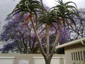 Rosebank Lodge Guest House, Pensionen  Johannesburg - big - 14