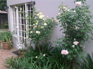 Rosebank Lodge Guest House, Pensionen  Johannesburg - big - 12