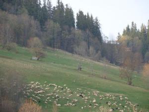 D.W Teresa, Homestays  Zakopane - big - 46