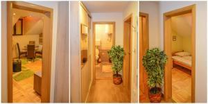 Apartments Josipovic, Appartamenti  Zlatibor - big - 9