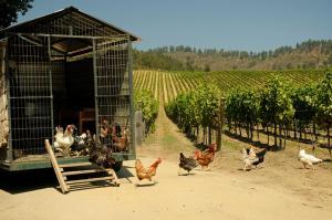 La Casona at Matetic Vineyards (21 of 23)