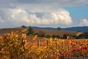 La Casona at Matetic Vineyards (7 of 23)