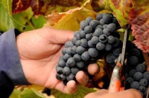 La Casona at Matetic Vineyards (20 of 28)