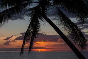 Thala Beach Nature Reserve, Port Douglas (22 of 74)