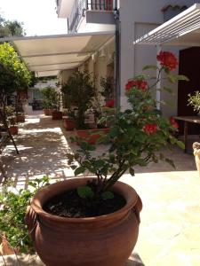 Il Giardino Dei Limoni, Отели типа «постель и завтрак»  Ачи Костелло - big - 43