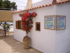 Ifigenia Apartments Aegina Greece