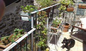 Casa Med Holiday Home, Holiday homes  Isolabona - big - 86