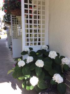 Waimarie on Riverside Motel & Apartments, Motel  Nelson - big - 39