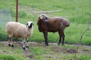 Kolhidskie Vorota Usadba, Farm stays  Mezmay - big - 154