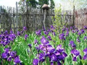 Kolhidskie Vorota Usadba, Farm stays  Mezmay - big - 150