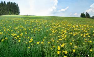 Kolhidskie Vorota Usadba, Farm stays  Mezmay - big - 18