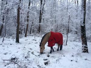 Kolhidskie Vorota Usadba, Farm stays  Mezmay - big - 147