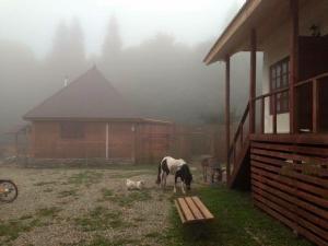 Kolhidskie Vorota Usadba, Farm stays  Mezmay - big - 175