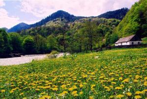 Kolhidskie Vorota Usadba, Farm stays  Mezmay - big - 291