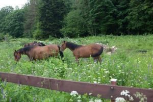 Kolhidskie Vorota Usadba, Farm stays  Mezmay - big - 70