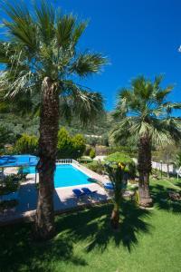 Villa Dimitris Apartments & Bungalows, Apartmány  Lefkada - big - 59