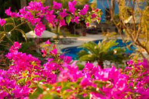 El Encanto Inn & Suites, Hotely  San José del Cabo - big - 65