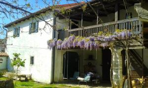 Apartmaji Hedera