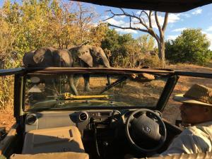 Elephant Valley Lodge, Chaty  Lesoma - big - 6