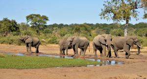 Elephant Valley Lodge, Chaty  Lesoma - big - 20
