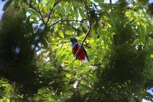 Talamanca Reserve, Отели  Rivas - big - 79