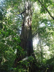 Talamanca Reserve, Отели  Rivas - big - 77
