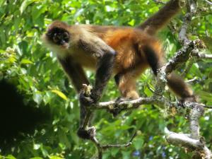 Talamanca Reserve, Отели  Rivas - big - 78