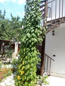 Guest House Granat, Affittacamere  Kabardinka - big - 24