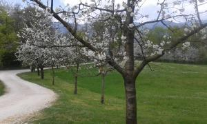 Auberges de jeunesse - Parco di San Floriano