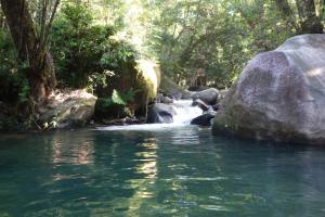 Daintree Secrets Rainforest Sanctuary - Cow Bay