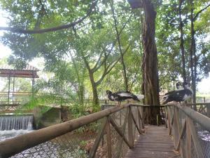 MS Campestre La Potra Plus, Hotels  Villavicencio - big - 28