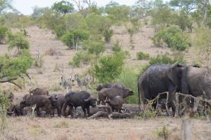 Buffelshoek Tented Camp, Luxusné stany  Manyeleti Game Reserve - big - 5