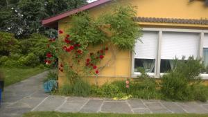 Swiss Borzoi House, Bed and Breakfasts  Bellerive - big - 43