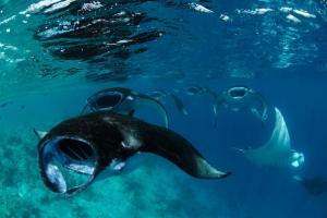 Four Seasons Resort Maldives at Landaa Giraavaru (38 of 52)