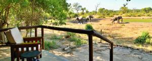 Elephant Valley Lodge, Chaty  Lesoma - big - 11