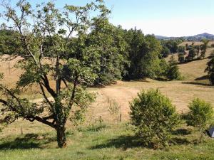 La Forêt du Burg