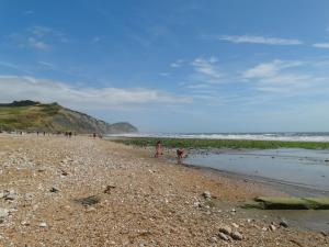 Pippin, Charmouth - Charmouth