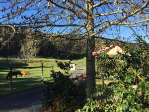Gracefield Cottage, Farmy  Neerim South - big - 18