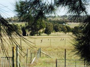 Rocky Ridge Retreat, Bauernhöfe  Mudgee - big - 26